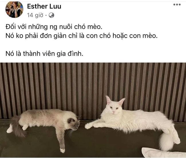 Hari Won gây tranh cãi khi đăng đàn ẩn ý vụ hai bạn trẻ đưa mèo đi khám gặp chốt kiểm soát-1
