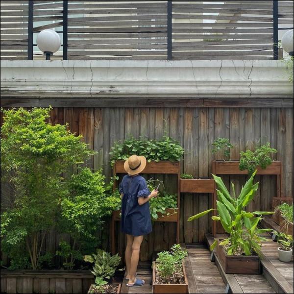 Ngày dịch rau xanh khan hiếm, khu vườn trong biệt thự triệu đô của Tăng Thanh Hà thật quý giá, đi một vòng có ngay bát canh ngon-2