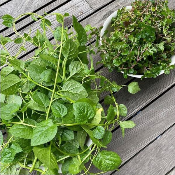 Ngày dịch rau xanh khan hiếm, khu vườn trong biệt thự triệu đô của Tăng Thanh Hà thật quý giá, đi một vòng có ngay bát canh ngon-3