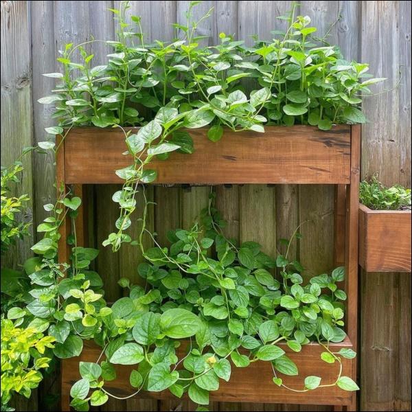 Ngày dịch rau xanh khan hiếm, khu vườn trong biệt thự triệu đô của Tăng Thanh Hà thật quý giá, đi một vòng có ngay bát canh ngon-4
