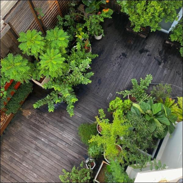 Ngày dịch rau xanh khan hiếm, khu vườn trong biệt thự triệu đô của Tăng Thanh Hà thật quý giá, đi một vòng có ngay bát canh ngon-8