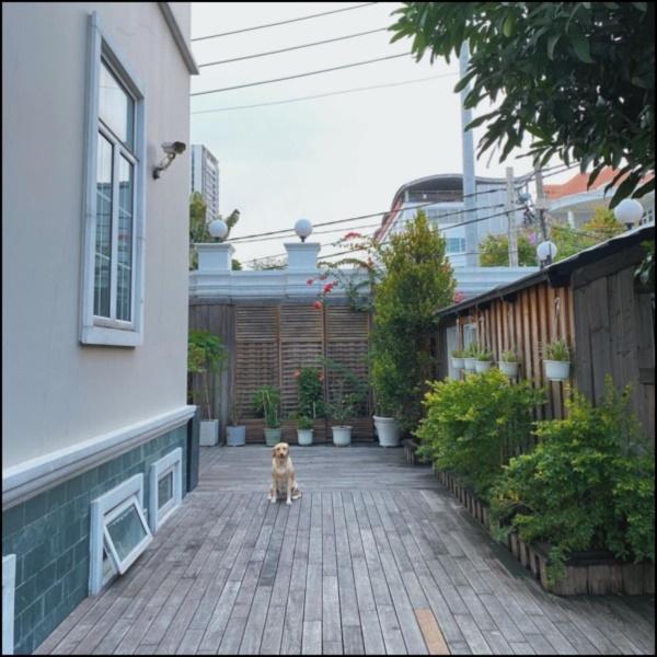 Ngày dịch rau xanh khan hiếm, khu vườn trong biệt thự triệu đô của Tăng Thanh Hà thật quý giá, đi một vòng có ngay bát canh ngon-10