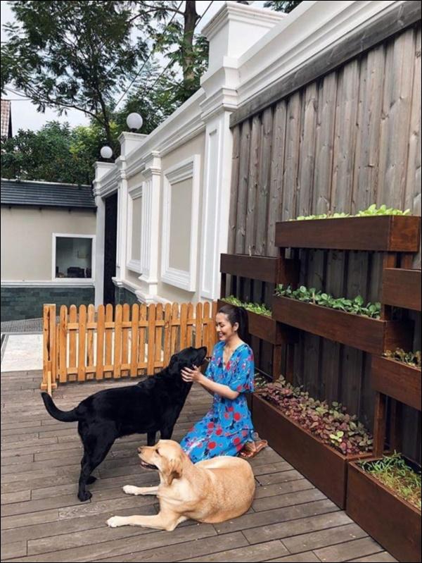 Ngày dịch rau xanh khan hiếm, khu vườn trong biệt thự triệu đô của Tăng Thanh Hà thật quý giá, đi một vòng có ngay bát canh ngon-12