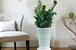 5 loại cây chớ trồng trong nhà kẻo đón vận xui về, tài lộc tiêu tán, dễ gây hại sức khỏe-2