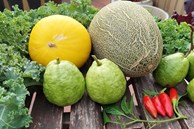 Sân thượng 50m² không khác gì trang trại với đủ loại rau quả sạch theo mùa của mẹ đảm ở Hà Nội