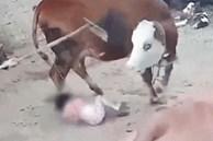 Bé gái 4 tuổi bị bò nổi điên tấn công, đoạn video ghi lại cảnh tượng thót tim khiến dân mạng bàn tán sôi nổi