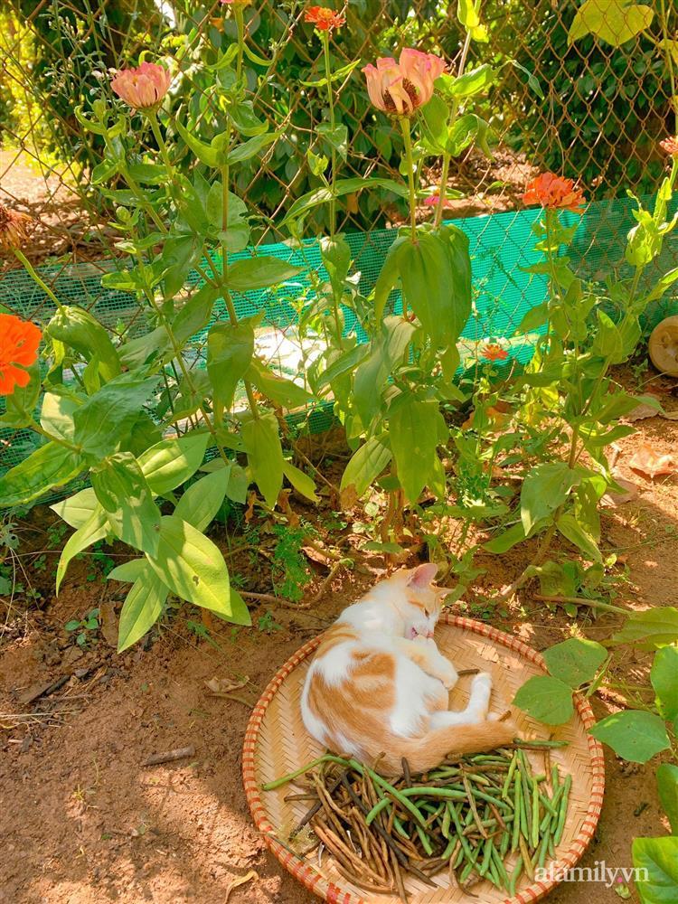 Cuộc sống yên bình bên khu vườn 2000m² sau hai năm bỏ phố về quê của cặp vợ chồng 9X-10