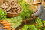 Khoảng sân nhỏ biến thành khu vườn đủ loại rau sạch tốt tươi nhờ tình yêu trồng trọt của mẹ trẻ-21
