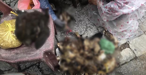 Lùm xùm khắc tên lên mai rùa chưa lắng, Thuỷ Tiên bị netizen khui lại clip treo ngược đàn cò lửa trên ô tô khi mua để phóng sinh-2