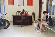 Cô gái Hà Nội bị phạt 2 triệu đồng vì dắt chó đi dạo