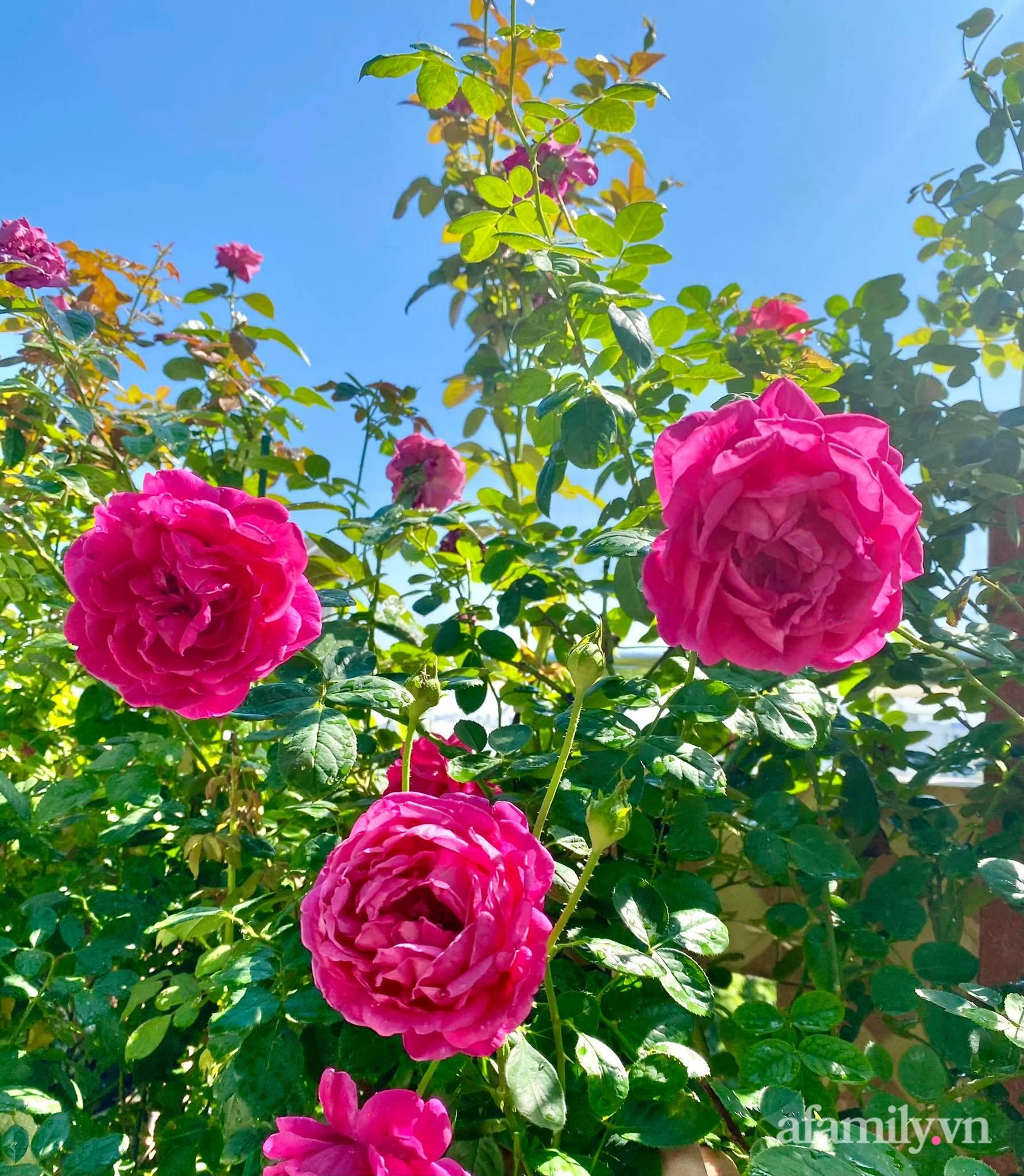 Sân thượng phủ kín hoa hồng và rau quả sạch ở Sài Gòn của Hoa hậu Janny Thủy Trần-10