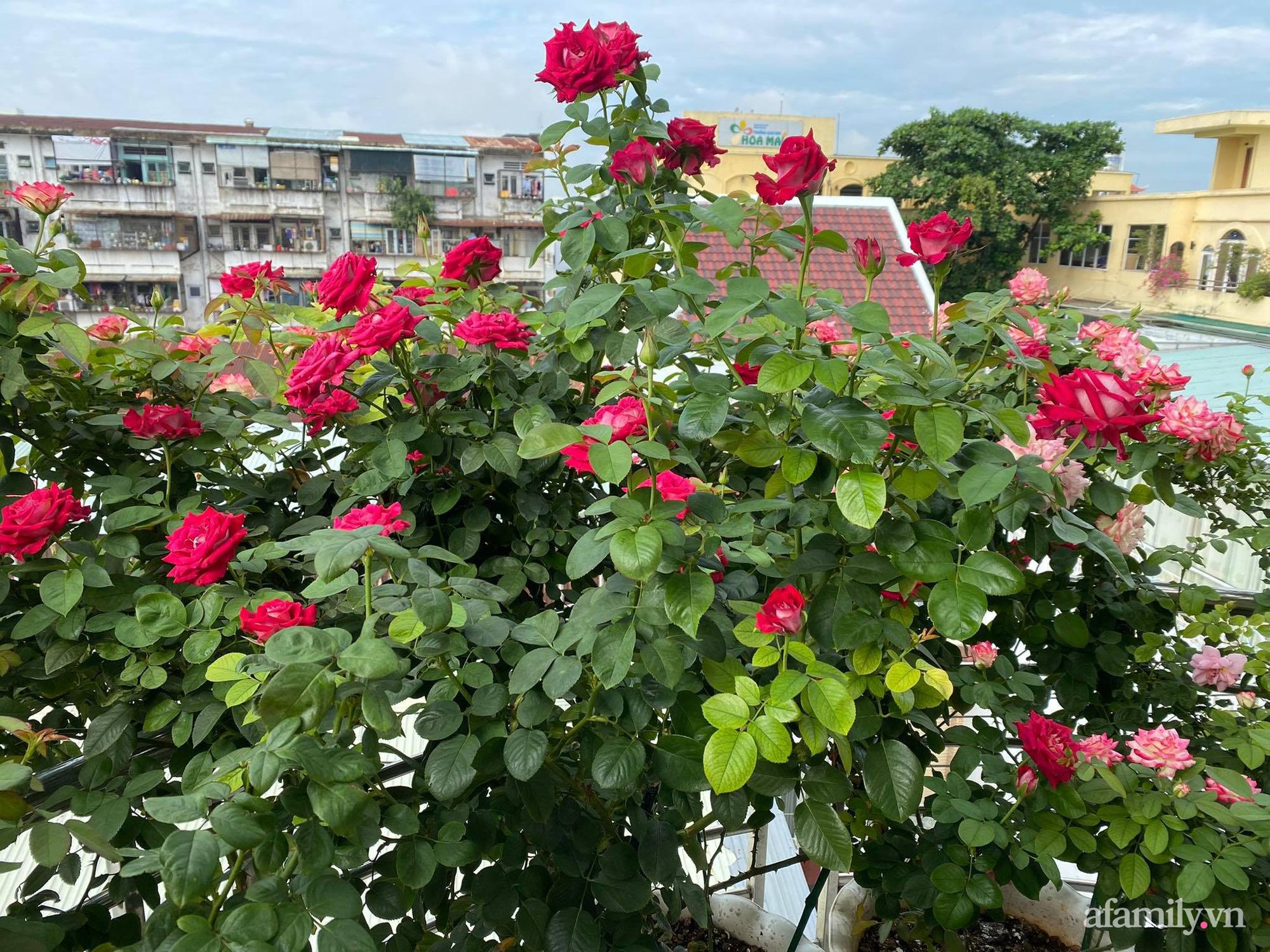 Sân thượng phủ kín hoa hồng và rau quả sạch ở Sài Gòn của Hoa hậu Janny Thủy Trần-3