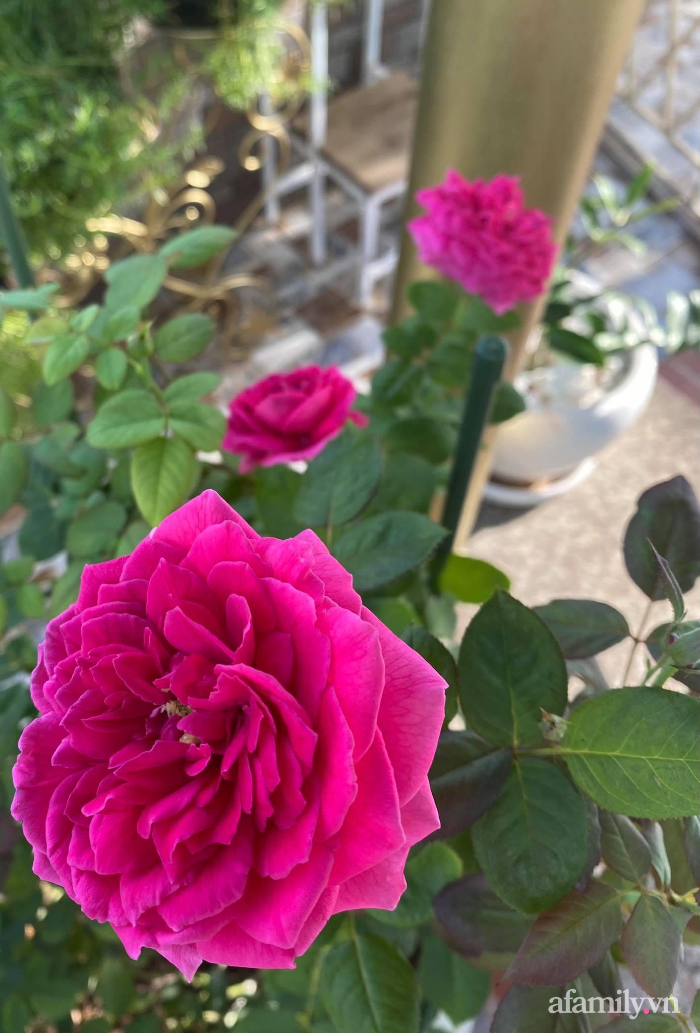 Sân thượng phủ kín hoa hồng và rau quả sạch ở Sài Gòn của Hoa hậu Janny Thủy Trần-21
