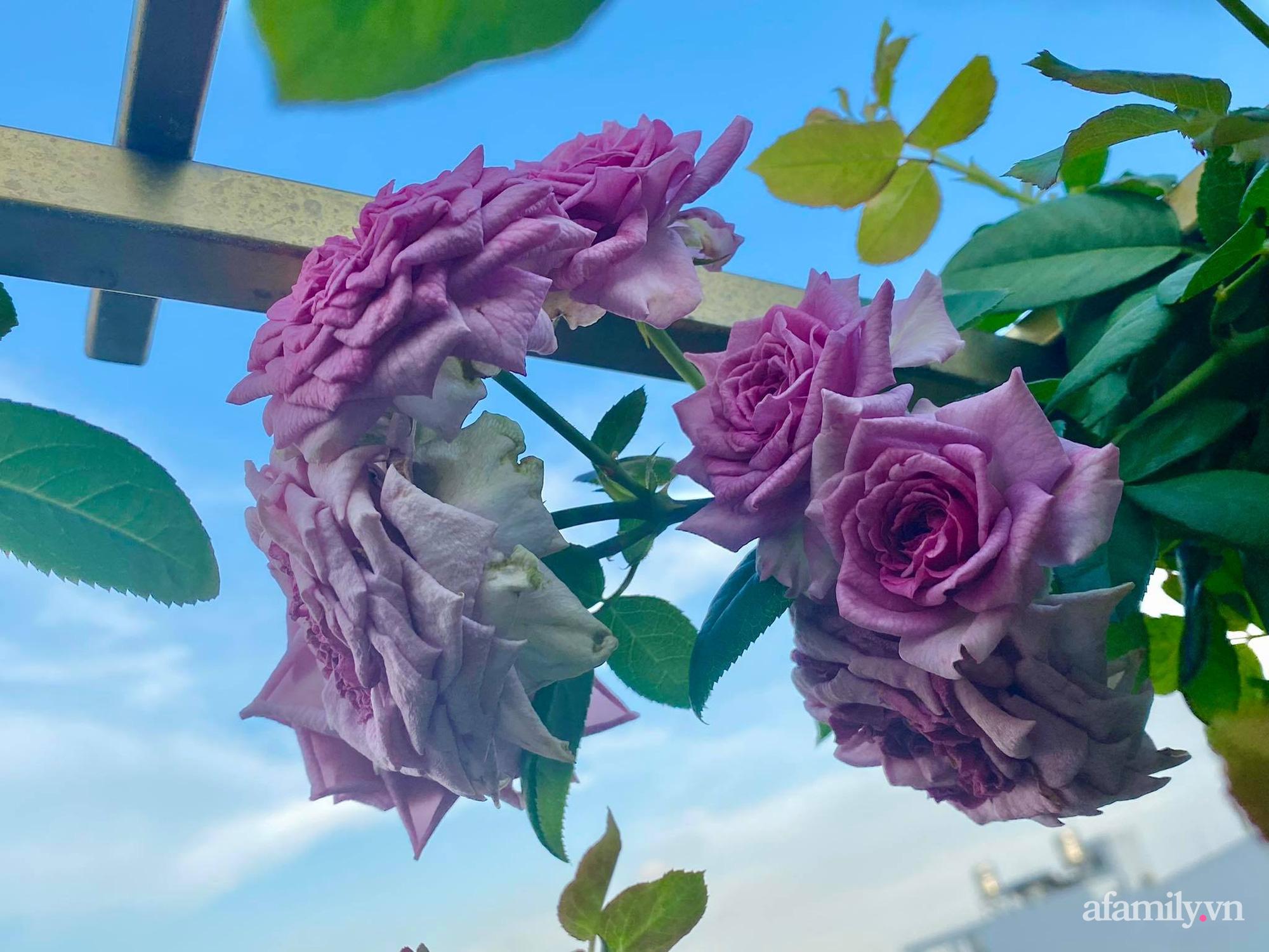 Sân thượng phủ kín hoa hồng và rau quả sạch ở Sài Gòn của Hoa hậu Janny Thủy Trần-15