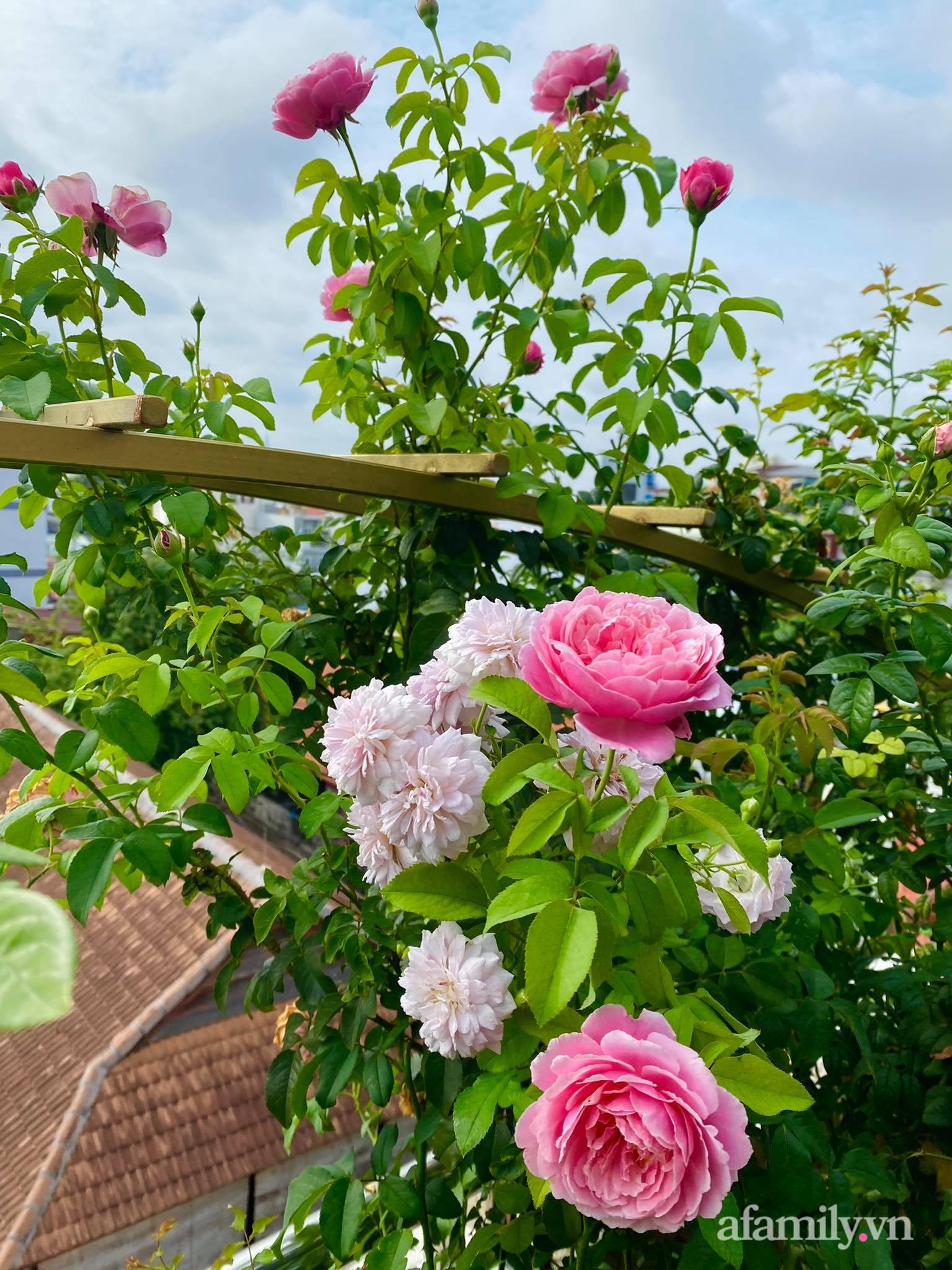 Sân thượng phủ kín hoa hồng và rau quả sạch ở Sài Gòn của Hoa hậu Janny Thủy Trần-8