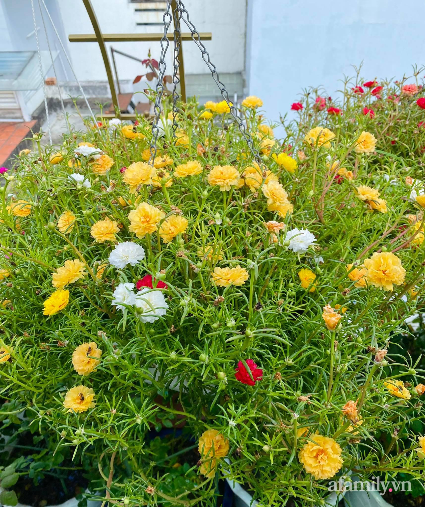 Sân thượng phủ kín hoa hồng và rau quả sạch ở Sài Gòn của Hoa hậu Janny Thủy Trần-23