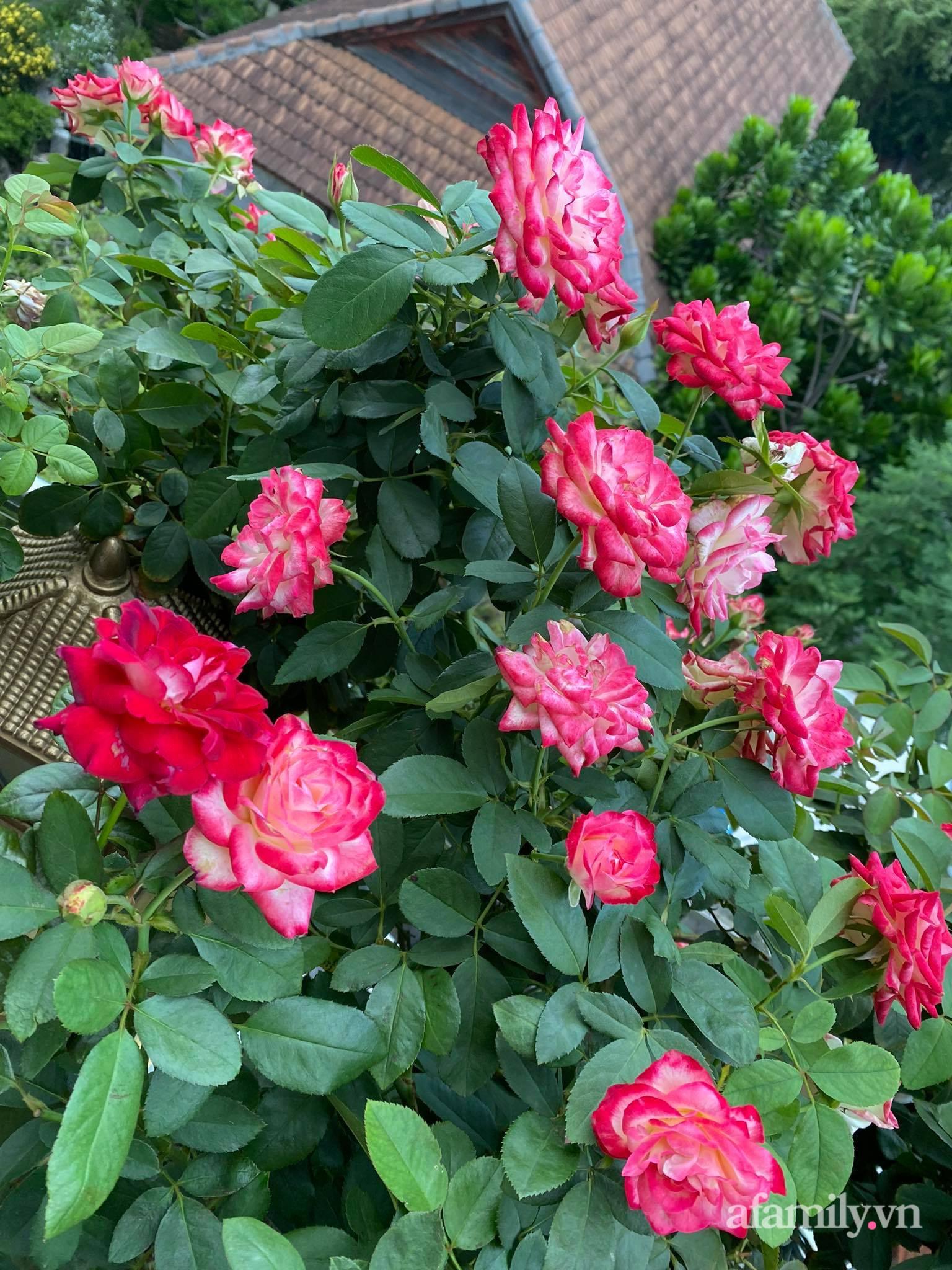Sân thượng phủ kín hoa hồng và rau quả sạch ở Sài Gòn của Hoa hậu Janny Thủy Trần-9