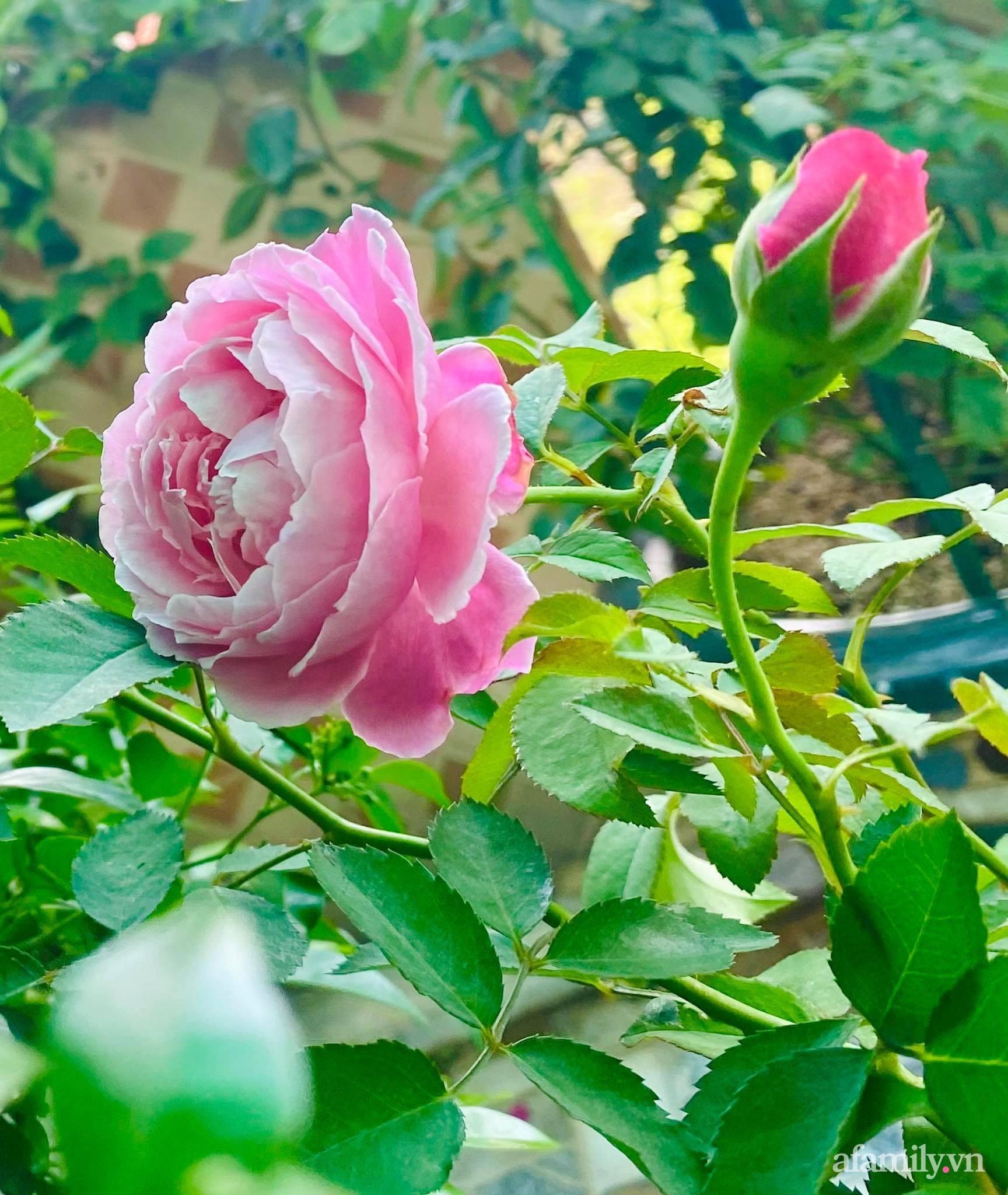 Sân thượng phủ kín hoa hồng và rau quả sạch ở Sài Gòn của Hoa hậu Janny Thủy Trần-12