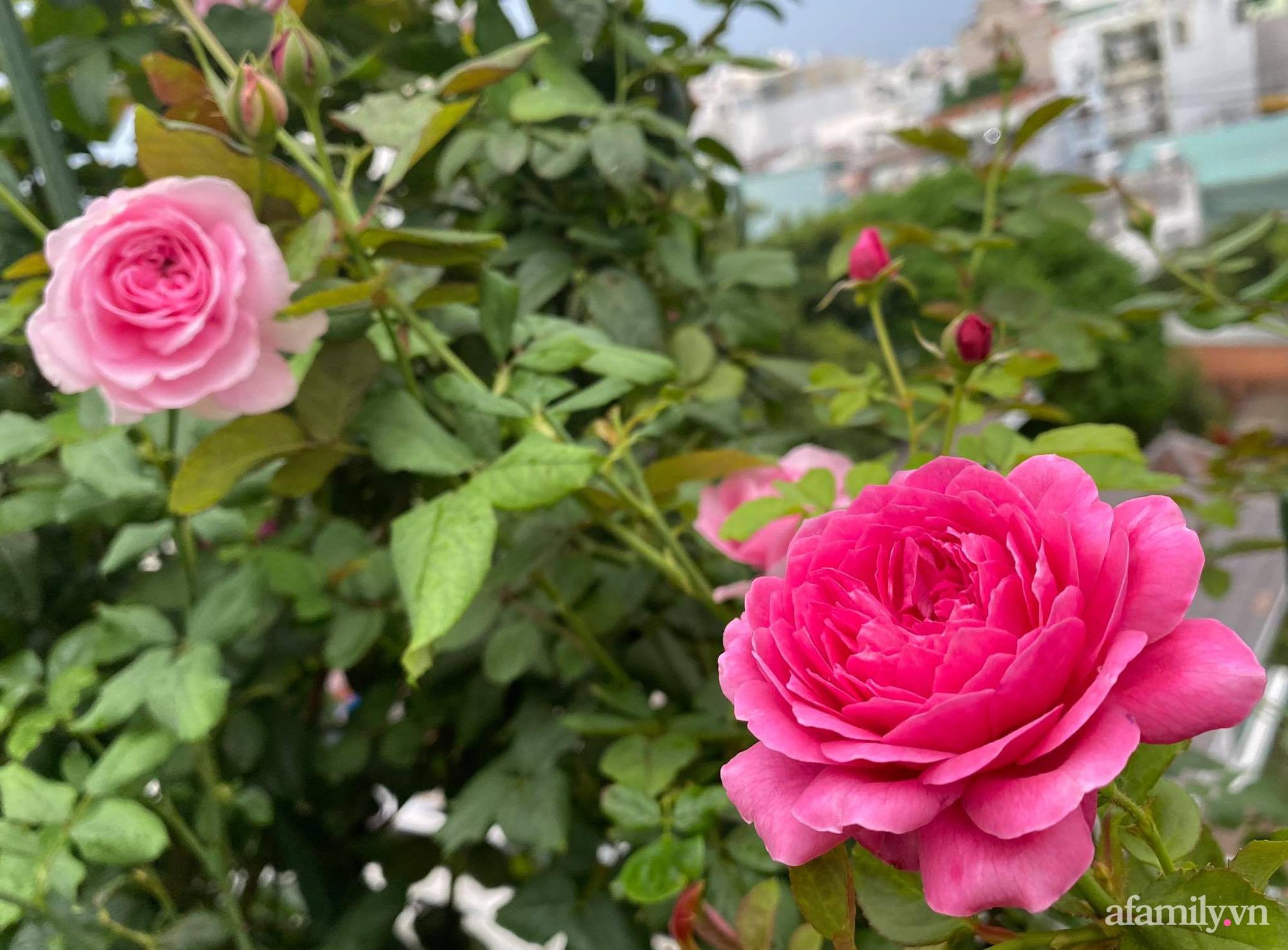 Sân thượng phủ kín hoa hồng và rau quả sạch ở Sài Gòn của Hoa hậu Janny Thủy Trần-11