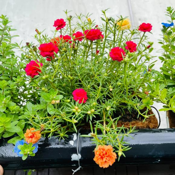 Ban công xanh mướt, ngập đầy hoa trong căn nhà mặt phố của vợ chồng diễn viên Hồ Bích Trâm-11