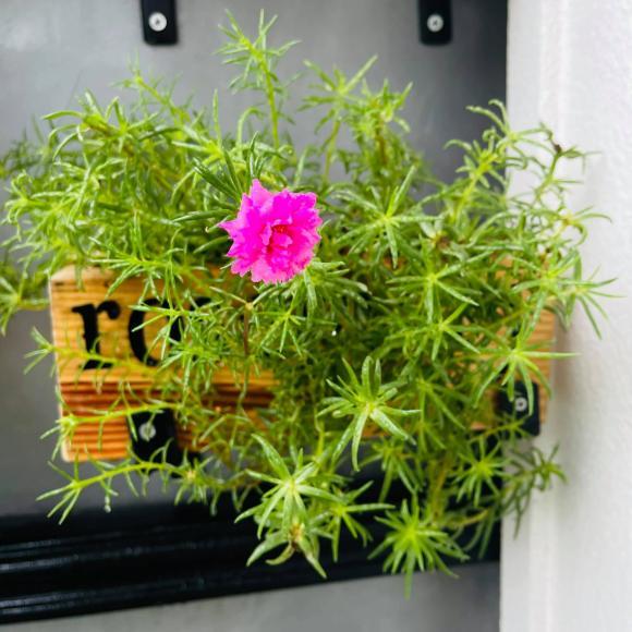 Ban công xanh mướt, ngập đầy hoa trong căn nhà mặt phố của vợ chồng diễn viên Hồ Bích Trâm-12