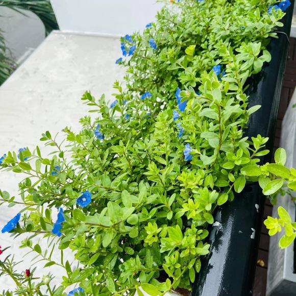 Ban công xanh mướt, ngập đầy hoa trong căn nhà mặt phố của vợ chồng diễn viên Hồ Bích Trâm-2