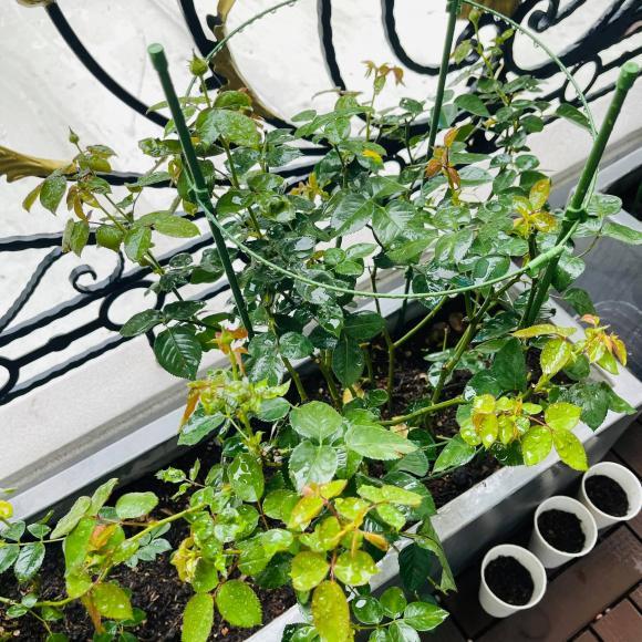 Ban công xanh mướt, ngập đầy hoa trong căn nhà mặt phố của vợ chồng diễn viên Hồ Bích Trâm-3