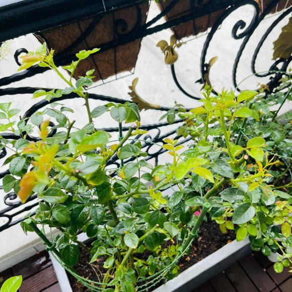 Ban công xanh mướt, ngập đầy hoa trong căn nhà mặt phố của vợ chồng diễn viên Hồ Bích Trâm-5
