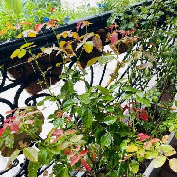 Ban công xanh mướt, ngập đầy hoa trong căn nhà mặt phố của vợ chồng diễn viên Hồ Bích Trâm-6