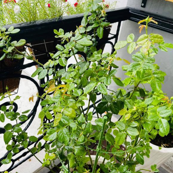 Ban công xanh mướt, ngập đầy hoa trong căn nhà mặt phố của vợ chồng diễn viên Hồ Bích Trâm-7