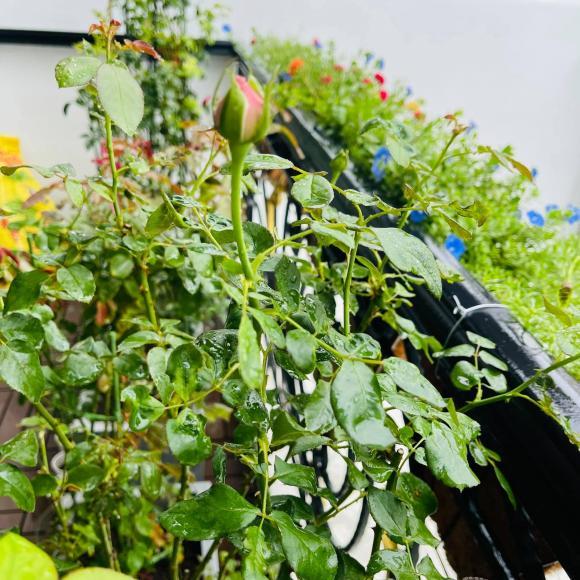 Ban công xanh mướt, ngập đầy hoa trong căn nhà mặt phố của vợ chồng diễn viên Hồ Bích Trâm-8