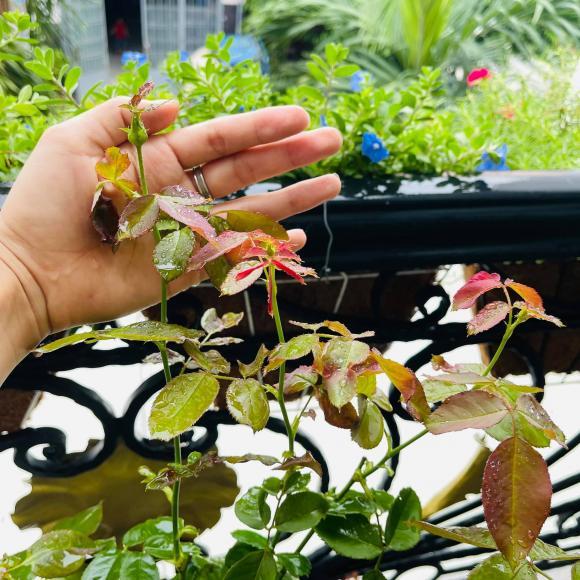 Ban công xanh mướt, ngập đầy hoa trong căn nhà mặt phố của vợ chồng diễn viên Hồ Bích Trâm-9