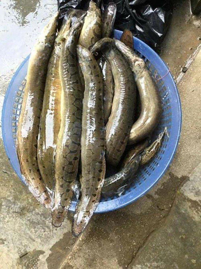 Ba đặc sản sông Đà giá cao vẫn hút khách-9
