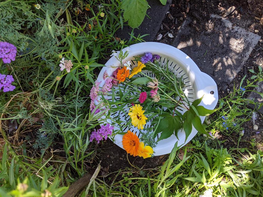 Khoảng sân nhỏ biến thành khu vườn đủ loại rau sạch tốt tươi nhờ tình yêu trồng trọt của mẹ trẻ-5