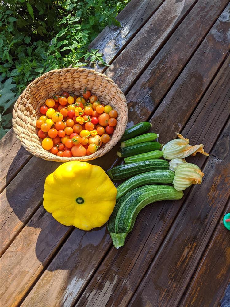 Khoảng sân nhỏ biến thành khu vườn đủ loại rau sạch tốt tươi nhờ tình yêu trồng trọt của mẹ trẻ-6