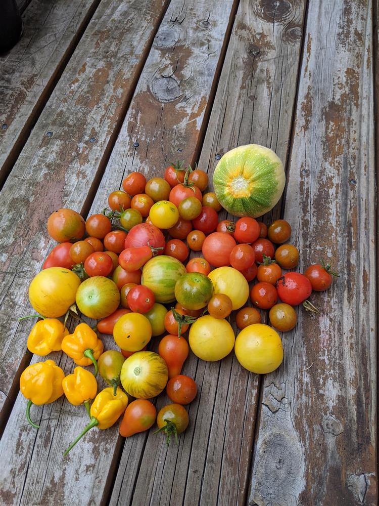 Khoảng sân nhỏ biến thành khu vườn đủ loại rau sạch tốt tươi nhờ tình yêu trồng trọt của mẹ trẻ-7