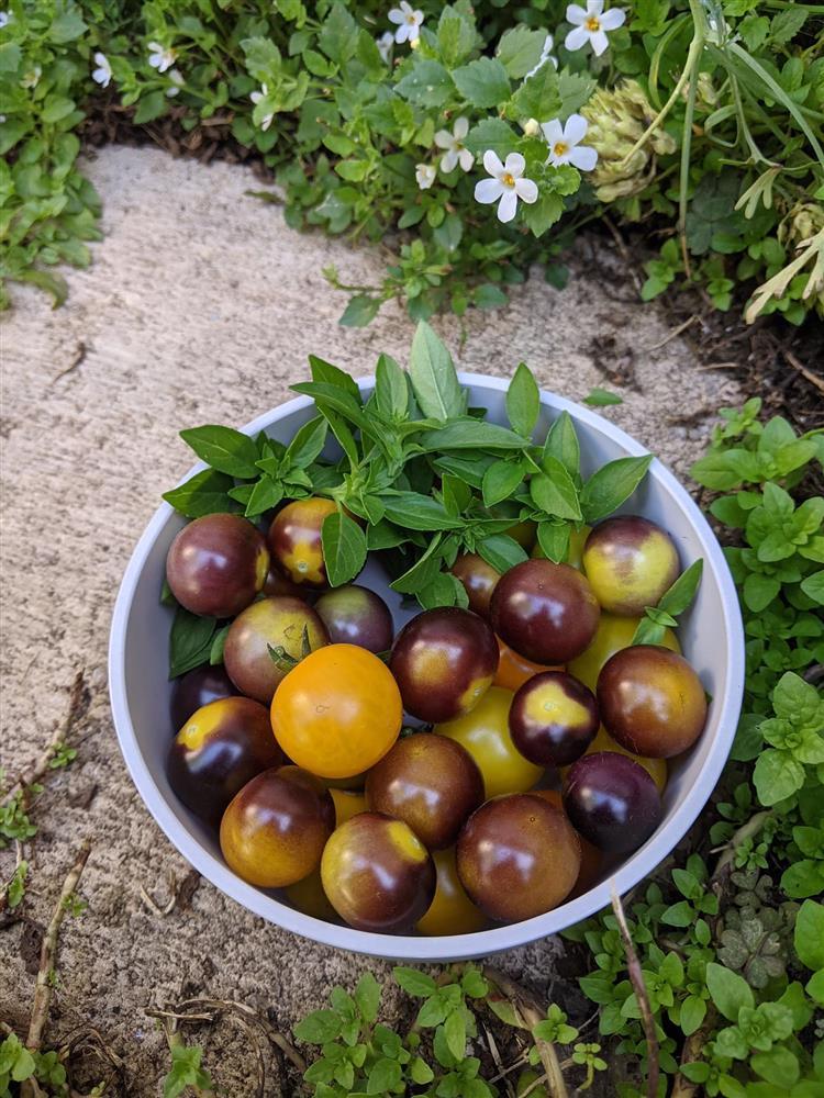 Khoảng sân nhỏ biến thành khu vườn đủ loại rau sạch tốt tươi nhờ tình yêu trồng trọt của mẹ trẻ-10