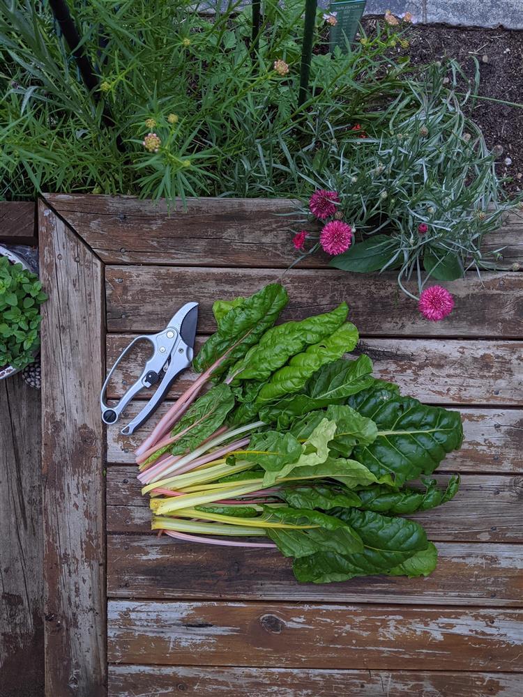 Khoảng sân nhỏ biến thành khu vườn đủ loại rau sạch tốt tươi nhờ tình yêu trồng trọt của mẹ trẻ-16