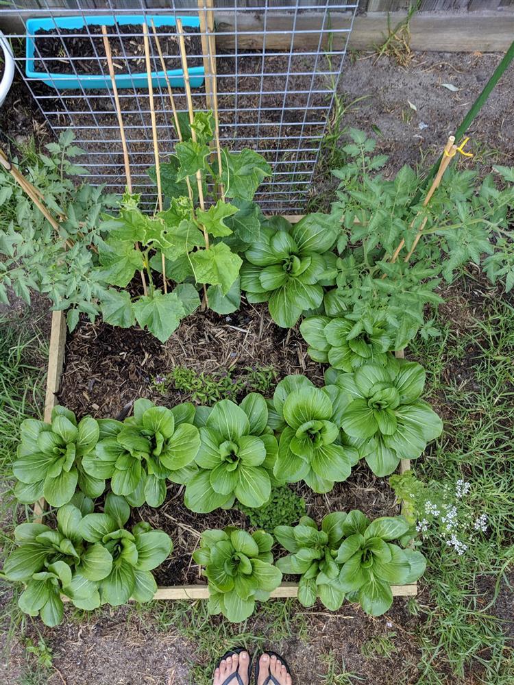 Khoảng sân nhỏ biến thành khu vườn đủ loại rau sạch tốt tươi nhờ tình yêu trồng trọt của mẹ trẻ-17