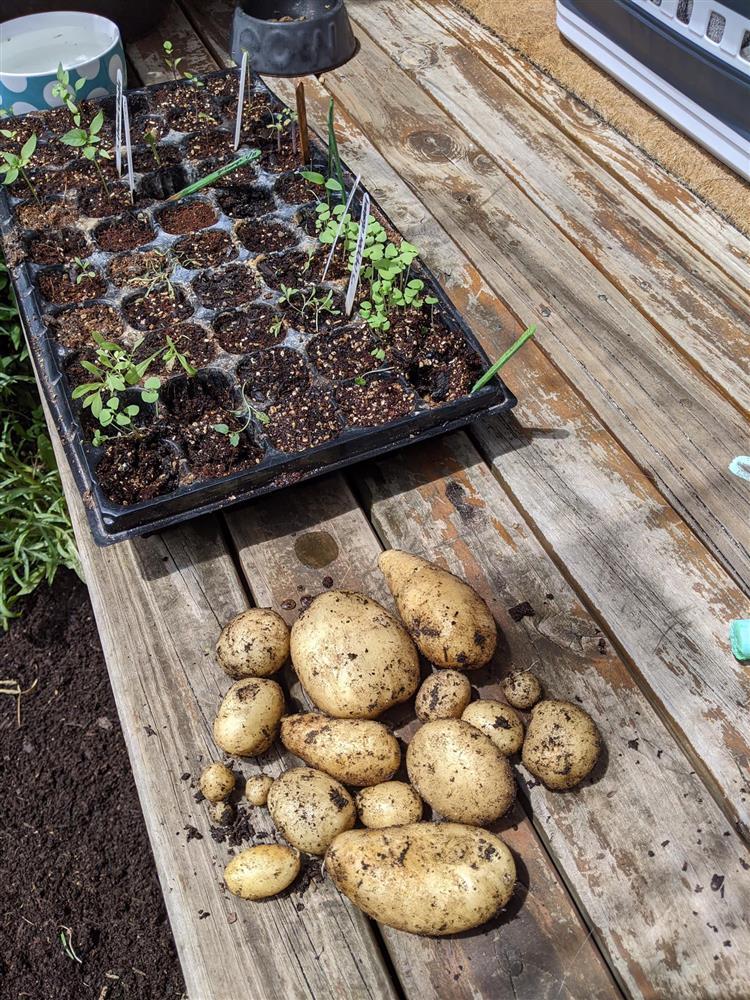 Khoảng sân nhỏ biến thành khu vườn đủ loại rau sạch tốt tươi nhờ tình yêu trồng trọt của mẹ trẻ-19