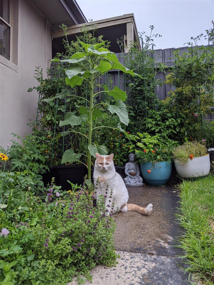 Khoảng sân nhỏ biến thành khu vườn đủ loại rau sạch tốt tươi nhờ tình yêu trồng trọt của mẹ trẻ-20