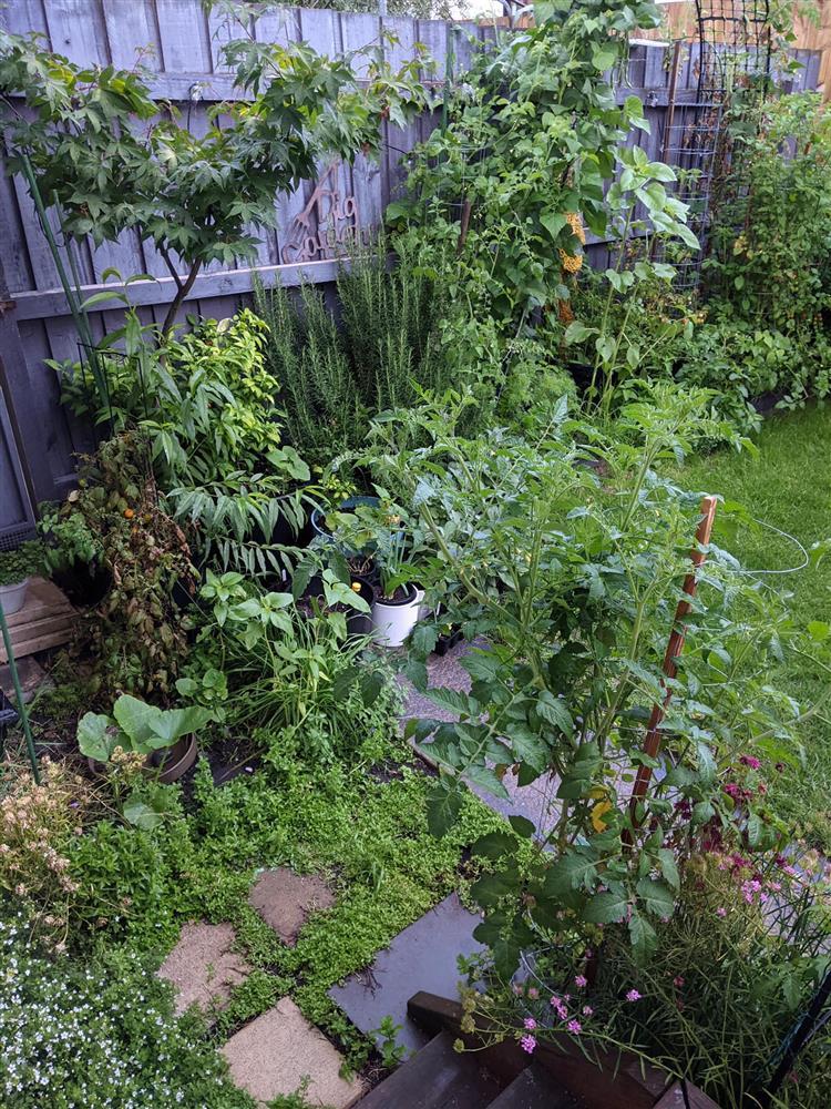 Khoảng sân nhỏ biến thành khu vườn đủ loại rau sạch tốt tươi nhờ tình yêu trồng trọt của mẹ trẻ-9