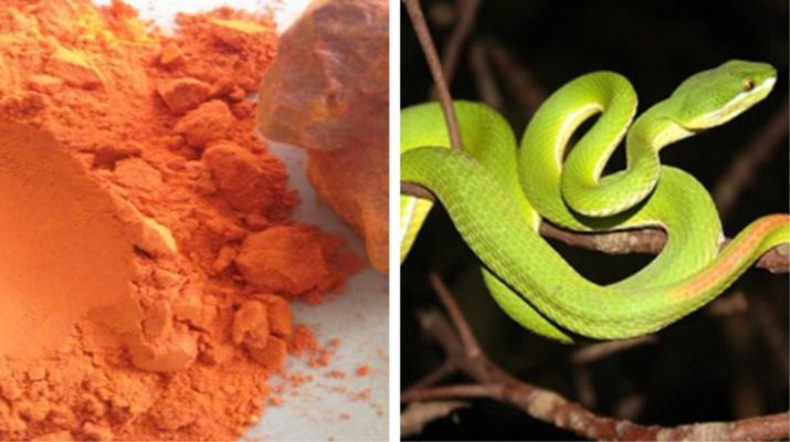 5 mẹo dân gian giúp xua đuổi rắn khiến chúng sợ hãi mà tránh xa nhà bạn-1