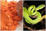 5 mẹo dân gian giúp xua đuổi rắn khiến chúng sợ hãi mà tránh xa nhà bạn