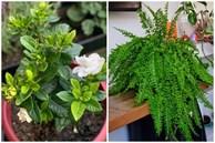 10 loại cây trồng giúp nhà thêm xinh xắn vừa mang lại giấc ngủ ngon