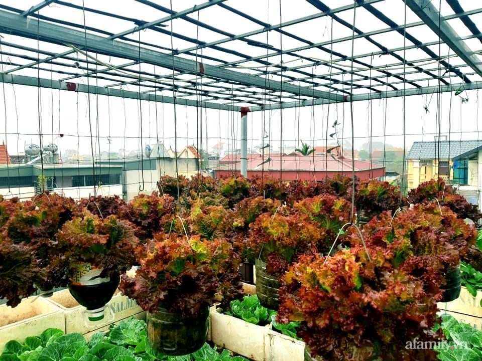 Cả năm không phải đi chợ mua rau quả nhờ làm vườn trên nóc nhà của mẹ đảm Hà Nội-1