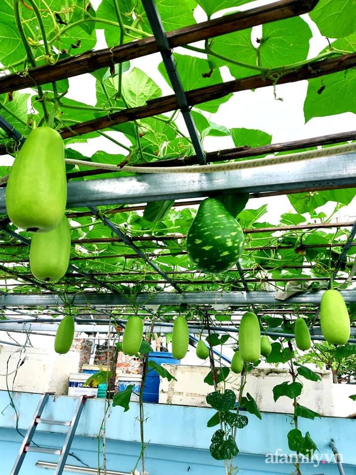 Cả năm không phải đi chợ mua rau quả nhờ làm vườn trên nóc nhà của mẹ đảm Hà Nội-2