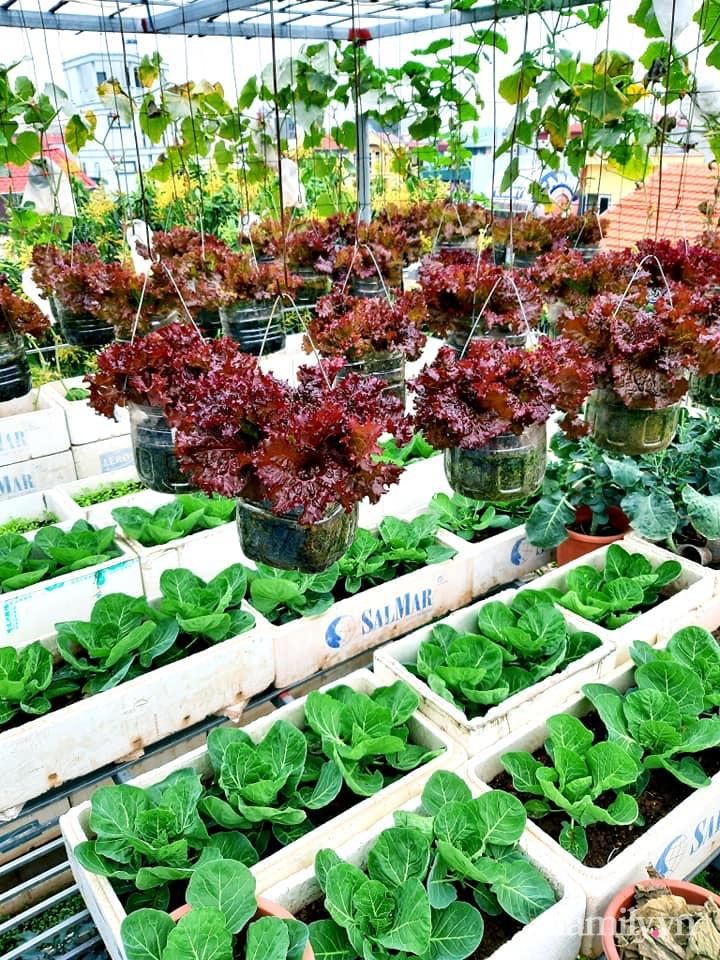 Cả năm không phải đi chợ mua rau quả nhờ làm vườn trên nóc nhà của mẹ đảm Hà Nội-3