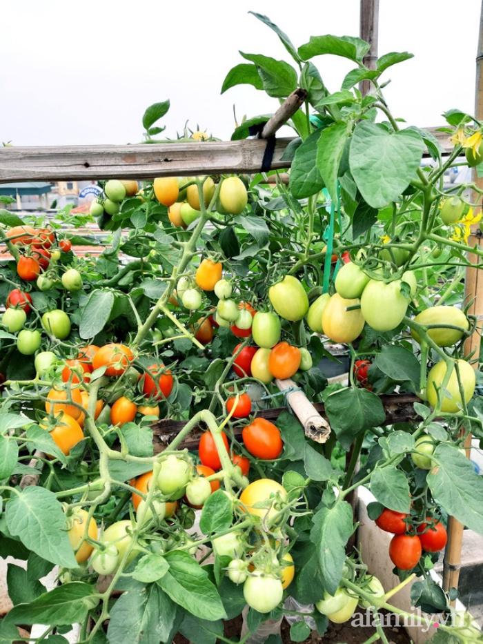 Cả năm không phải đi chợ mua rau quả nhờ làm vườn trên nóc nhà của mẹ đảm Hà Nội-4