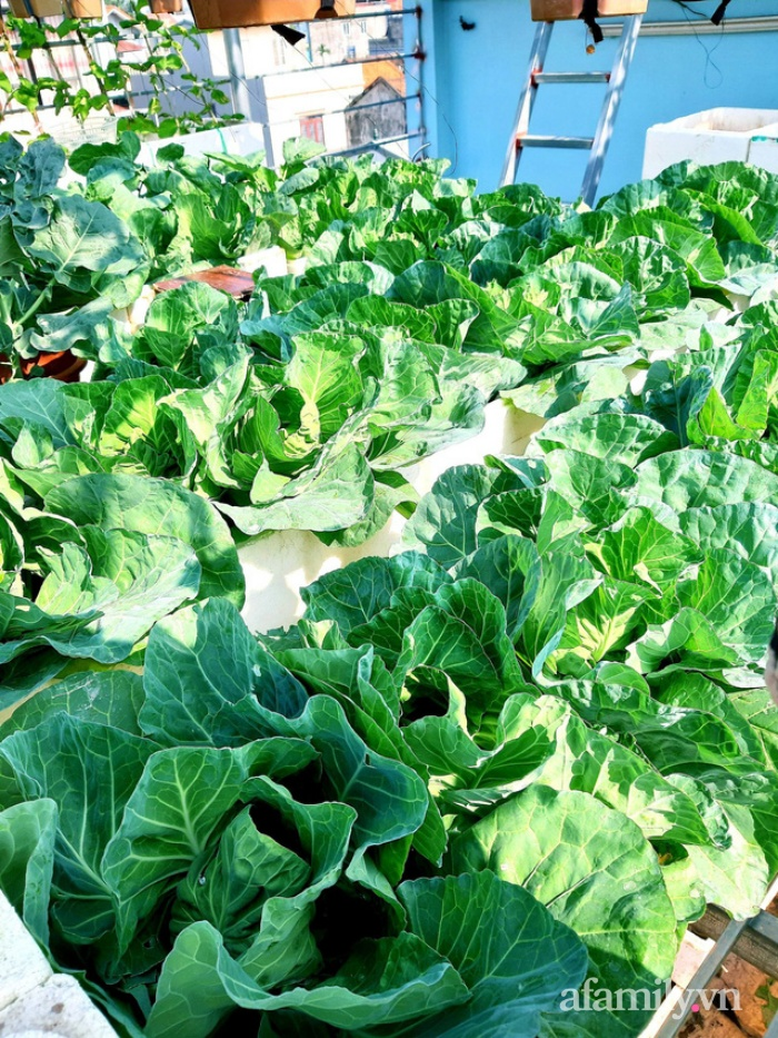 Cả năm không phải đi chợ mua rau quả nhờ làm vườn trên nóc nhà của mẹ đảm Hà Nội-6